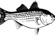 حکایت صیاد ضعیف و ماهی قوی