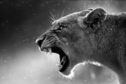 حیات وحش در معرض نابودی است
